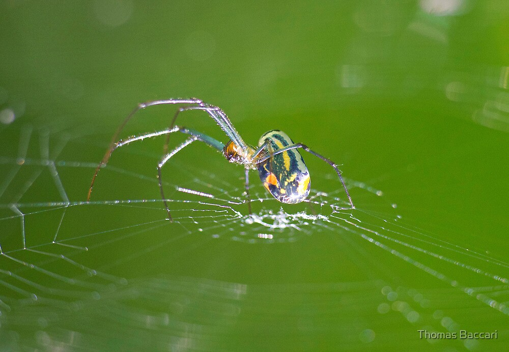 SPIDER by TJ Baccari Photography