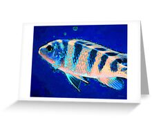 Bubbles - Fish Art By Sharon Cummings Greeting Card