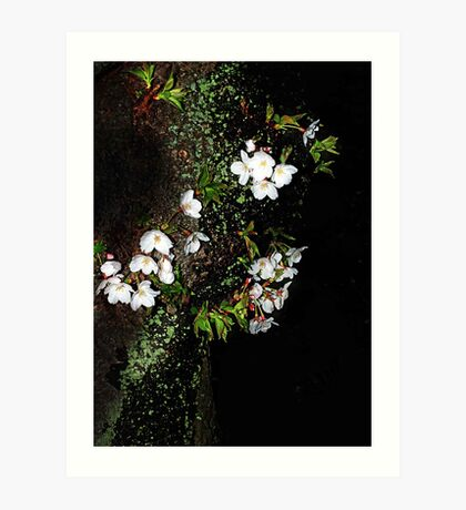 Nightly Japanese Cherry Blossoms Art Print