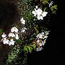 Nightly Japanese Cherry Blossoms by Bine