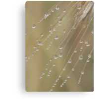Raindroplets on Wheat Canvas Print