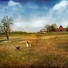 Running Back Home by John Rivera