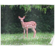 First Fawn Of The Year Poster