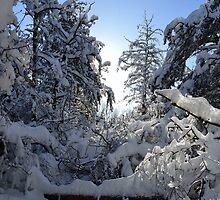 Snowy Winter Trees  by MoniqueFlynn