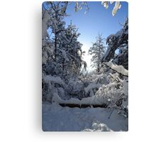 Snowy Winter Trees  Canvas Print