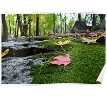 Moss Covered Forest Bed Poster