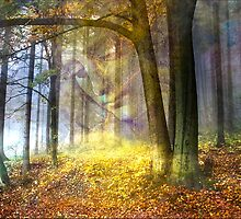 Magic of the forest by Yvonne Pfeifer