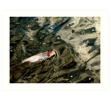 Fly Caught Rainbow Trout Art Print