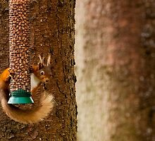 Red Squirrel by Moonlake