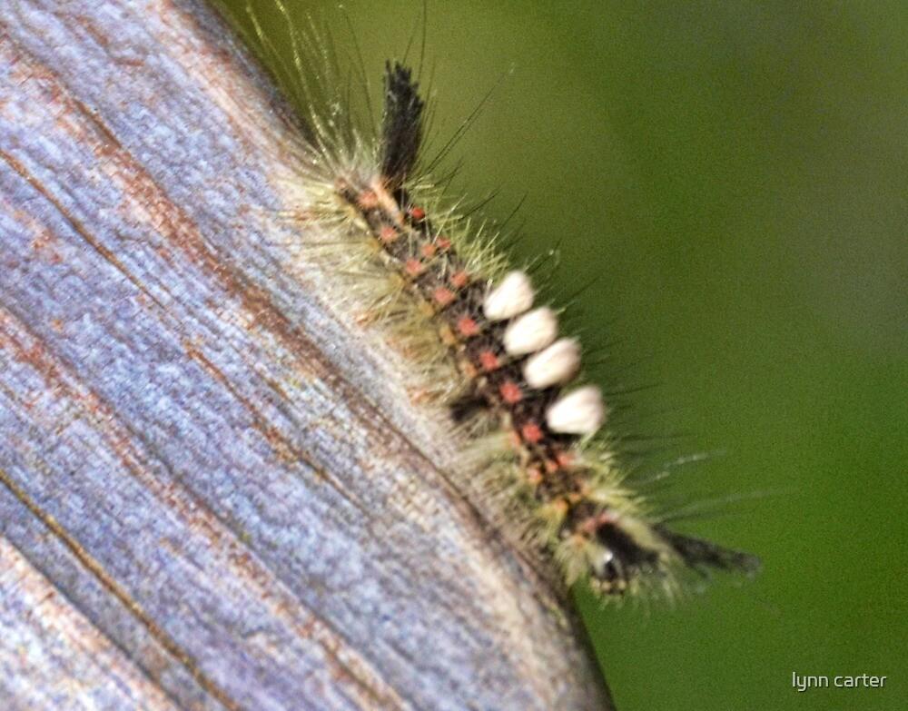 Caterpillar by lynn carter
