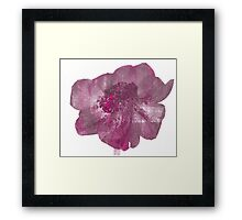 Pink and Purple Anenome Flower Print Framed Print