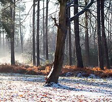 Winter in the woods, Newark by Dan-Painter