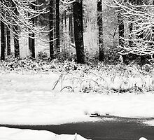 Winter in the woods by Dan-Painter