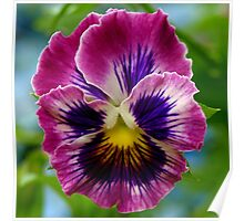 Perfect Pansy. Poster