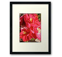Governor General's Roses  #5 Framed Print