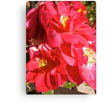 Governor General's Roses  #5 Canvas Print