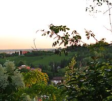 Prosecco Vineyards by svchristian