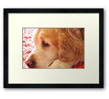 Amber Sleepy Framed Print