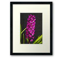 Arpophyllum alpinum (spike) Framed Print