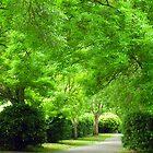 The Green Walk  by Antoinette B