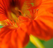 Close-up in orange by Karen Eaton