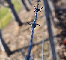 Barbed Wire by Christine Barnes