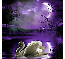 Moonlight Serenade Photographic Print