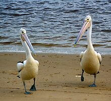 Pelican Two-Step by KarenEaton