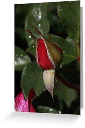 When I Burst Into Bloom ... ... ... by Robert Armendariz