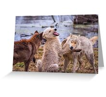Dharma and her pups Greeting Card