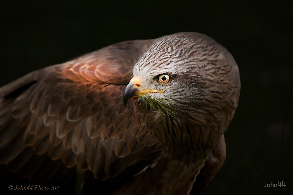 ..a Bird with Class.. [FEATURED] by John44