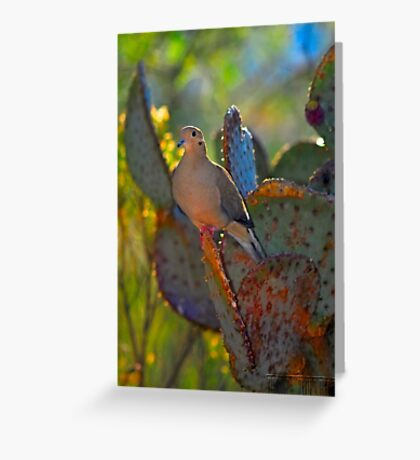 Dove Greeting Card
