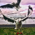 Hobson's Bay Gulls by V1mage