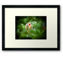 Poppy Bud Framed Print