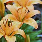 Lovely Lillies by Keala