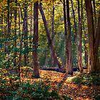 Fall Sunlight by Wib Dawson