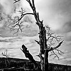 Weathered Stump by Wib Dawson