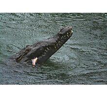 American Crocodile #1 Photographic Print