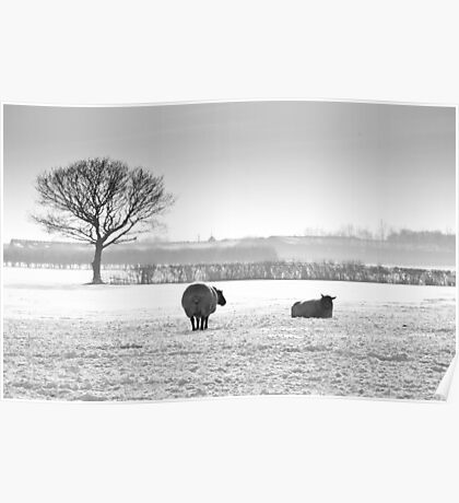 Snow scene with sheep Poster