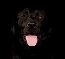 Black labrador by paulwhittle