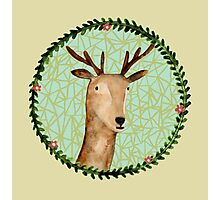 Deer Portrait Photographic Print