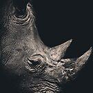 Rhino by jjbentley