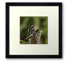 Dragonfly Reads Morning Newspaper Framed Print