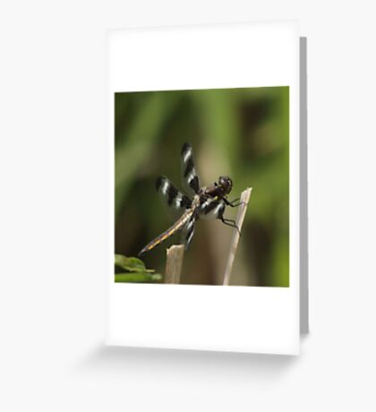 Dragonfly Reads Morning Newspaper Greeting Card