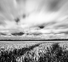 Corn Fields in the wind by Ian Hufton
