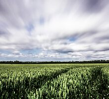 Cornfields in the wind by Ian Hufton