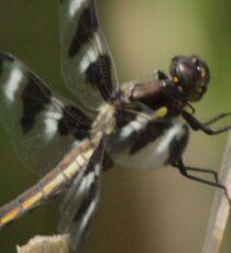 Dragonfly Reads Morning Newspaper Sticker
