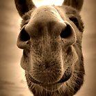 Wonkey Donkey by Ladymoose