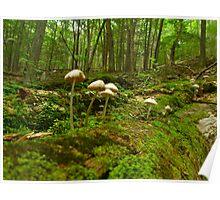 Log Mushrooms Poster