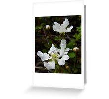 Wild Dewberry Blossoms Greeting Card